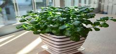 厨房中植物摆放风水禁忌