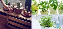 不同家居空间配置不同绿植
