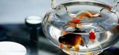 办公室风水 办公室养鱼禁忌