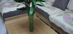 客厅风水十诫  正确的摆放植物