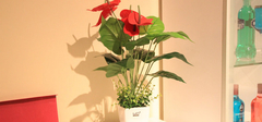 客厅植物摆放的四大风水禁忌