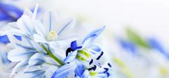 兰花在栽培中你做了多少错事?