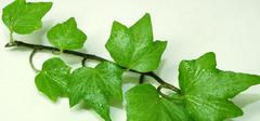 家居生活中常见的室内净化空气的植物
