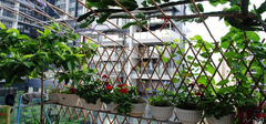 阳台装修时事先规划出一片种菜区域好处多多