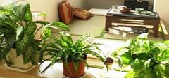 家居风水植物选择 不看你后悔