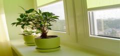 室内植物把你的家打造成绿色氧吧