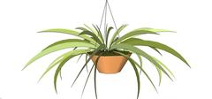 既能吸收甲醛又能带来风水好运的客厅植物(1)