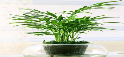 客厅植物如何摆放,客厅植物摆放风水有哪些讲究
