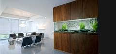 办公室养鱼需要注意的风水事项