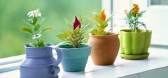 家居风水植物摆设知识