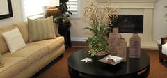 客厅风水之植物摆放的宜与忌
