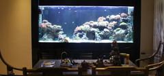 客厅养鱼风水注意事项