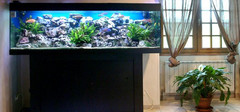 超级灵验的鱼缸摆放风水