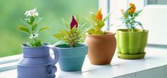 讲述室内植物的招财之道