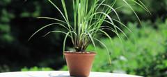 这些盆栽会让你的卫生间风水更好!
