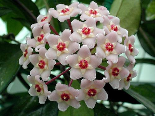 藤蔓植物,安全隐患