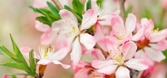 哪些生肖的桃花运势最好?