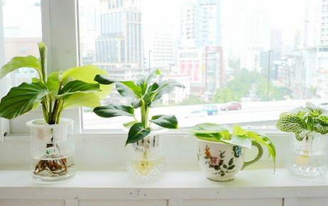 在房间放入盆栽去除油漆味