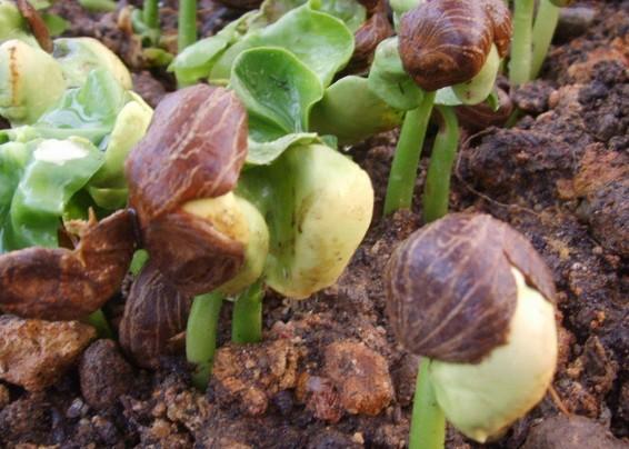 发财树养殖方法
