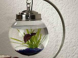 DIY小物件之鱼缸