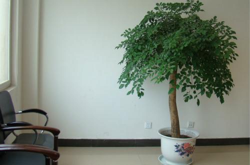 幸福树效果图