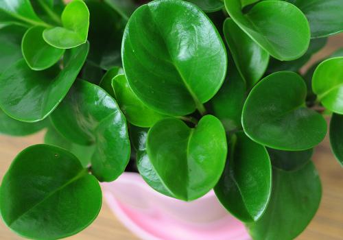 豆瓣绿效果图
