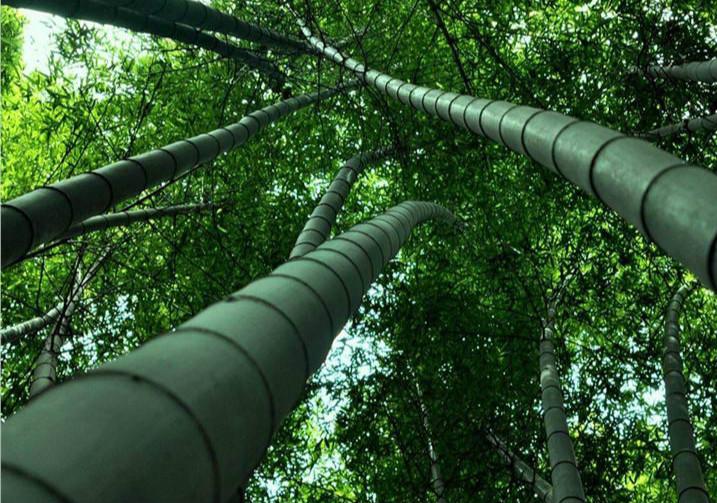 竹子象征寓意美好