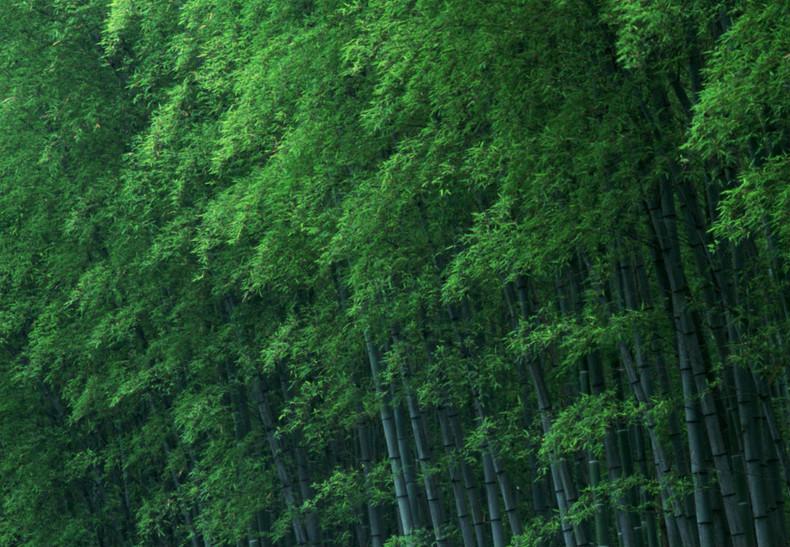 竹子象征柔中有刚