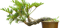 室内植物与装修风水之间的相生相克