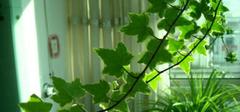 适合家庭养殖的盆栽植物有哪些?