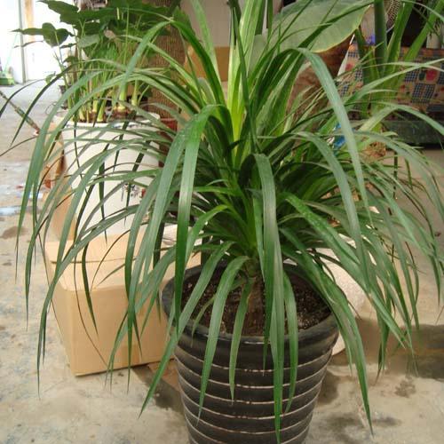 植物具有强烈的风水效应