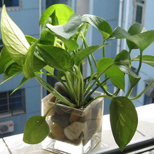 不适宜放在家中的植物
