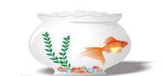 鱼缸的摆放位置及注意事项