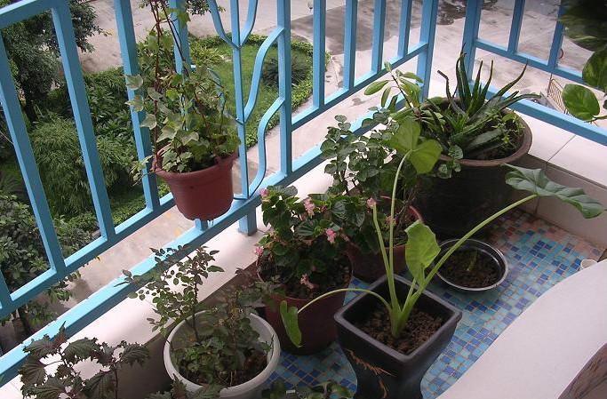阳台种花要素