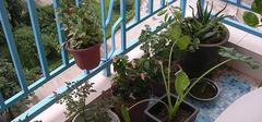 阳台种花要素有哪些?