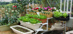 露台花园的设计原则是什么?