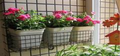 阳台花架该如何选购?