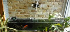 家庭养鱼风水有什么讲究