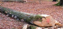 榉木的特点,榉木的优缺点