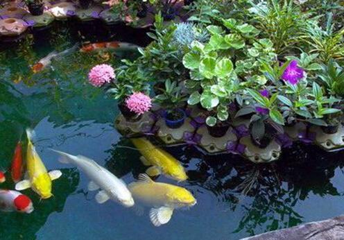 庭院风水之鱼池风水