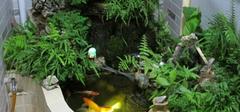 庭院风水之鱼池风水,美观景色带好运!