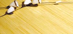 选购竹地板的秘籍有哪些?