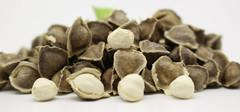 辣木籽适用的人群,辣木籽的功效