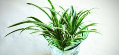 水培植物养殖,为家居添活力!
