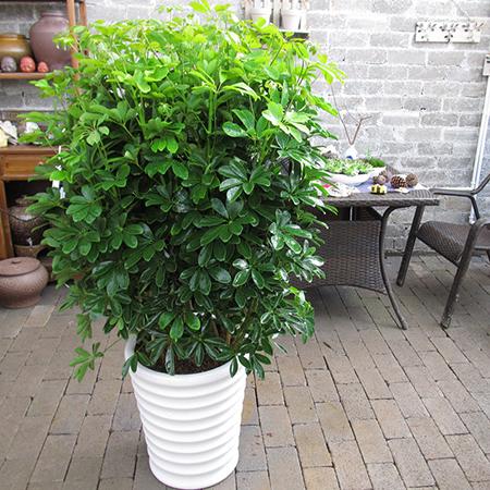 净化空气的室内植物