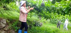 百香果的种植技术与方法介绍