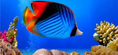 什么是热带鱼,热带鱼怎么养