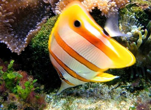 热带鱼怎么养