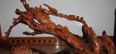 红豆杉盆景价格,红豆衫根雕收藏!