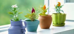 有利于家居风水的植物有哪些?